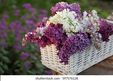 White and purple lilac flowers basket / Syringa vulgaris