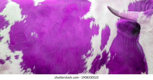 A white and purple spots of a cow skin texture