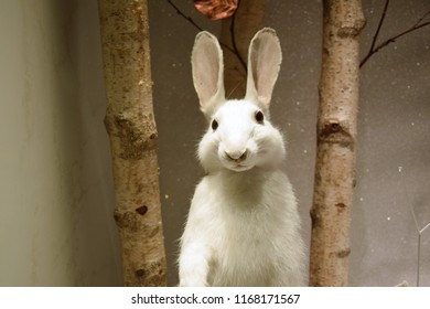 White rabbit and branches