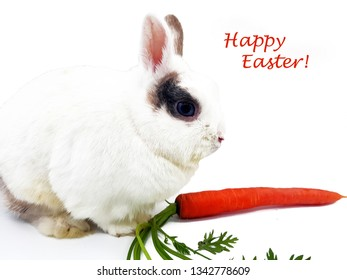 White Rabbit with Carrot on a white Background