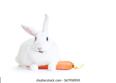 white rabbit isolated on white holding a carrot