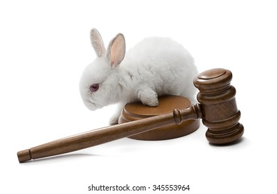 White rabbit on judge gavel isolated on white background - Animal protection laws concept.