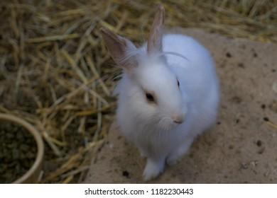 white rabbit on the stone