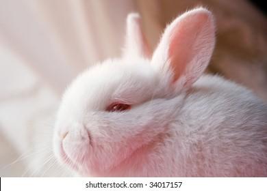 White rabbit portrait