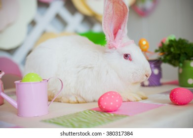 White rabbit sitting near Easter decoration eggs