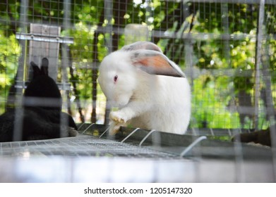 White rabbit washes his face in a cage with a black friend