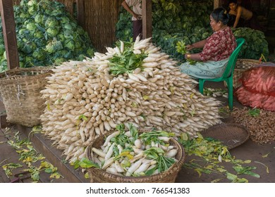 White radish shop, Mandalay, Burma, February 2012: A woman cleans vegetables at her shop in Mandalay´s fresh food market next to a huge pile of Burmese white radishes.