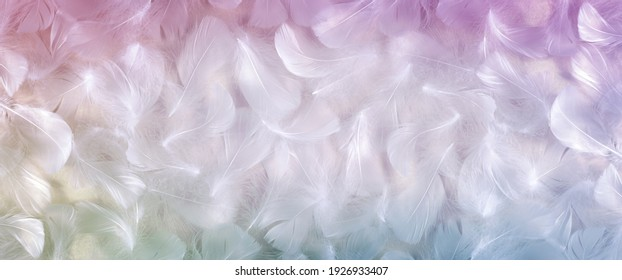 White and Rainbow coloured feather background banner - fluffy white feathers laid flat with a rainbow coloured vignette border frame ideal for spiritual messages