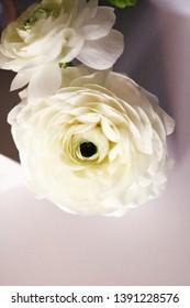 White Ranunculus Flowers Overhead in Vase