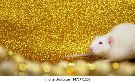 white rat on a gold background. close-up. Symbol of 2020. Copy space. symbol of wealth and abundance