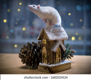 White rat sits on the roof of a toy house, Christmas, year of the Rat