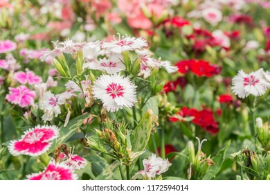 white and red flower.