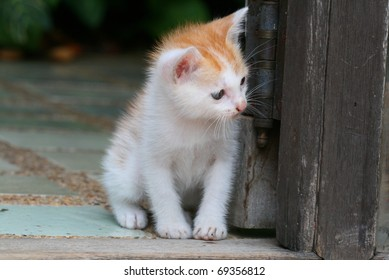 White and red kitten