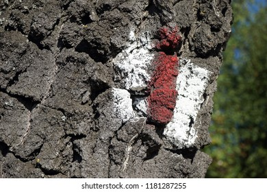 White and red mark on the tree