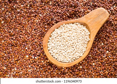 White and red quinoa seeds - Chenopodium quinoa.