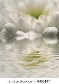 white reflection of chrysanthemum in rippled water