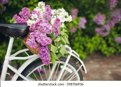 White retro bicycle with basket of flowers in the garden.