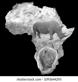 White rhino embedded on satellite image of the African continent. Elements of image supplied by NASA