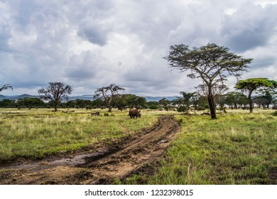 White rhino grazing on green African savanna grassland landscape