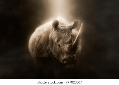 White rhino on a brown background with light on the body
