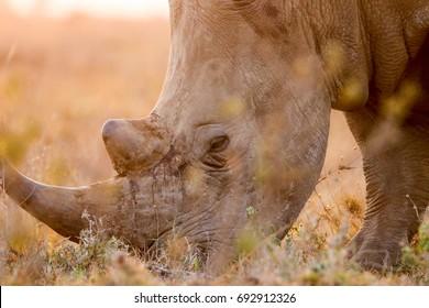white rhino photographed at the nairobi national park