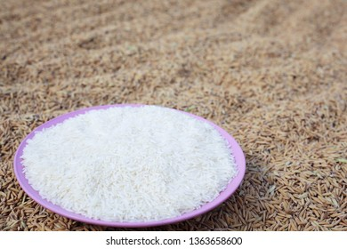 white rice on paddy rice seed background