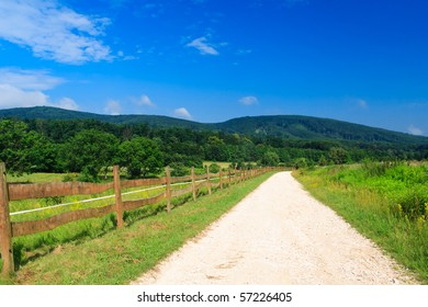 white road with blue sky in a green forest