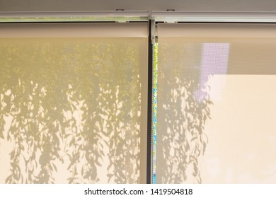 white roller blind in the glass room that protect hot sun and the shadow of hanging ornamental plants.