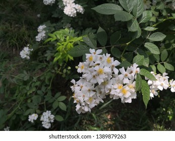 White Flowers Meaning Images, Stock Photos & Vectors