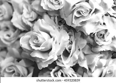 white rose in white and black  tone , shallow depth of field on white rose and capture abstract for customer can use in background work or add message in picture .