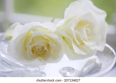 White Rose By The Window