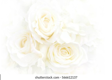 White rose can use as background. Soft blur focus. Made with blur style for background.