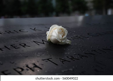 White rose in the dark shade at the 911 memorial world trade center, New York