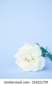white rose with filter effect retro vintage style