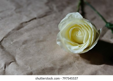 White rose flower on crumpled brown paper texture background.