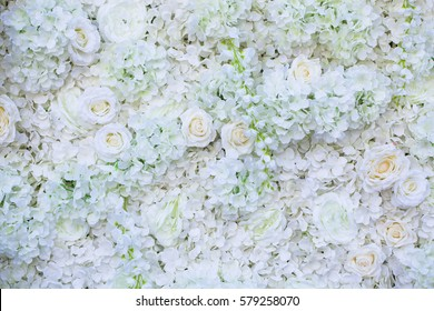 white rose flower on wall background.