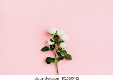 White rose flowers bouquet on pastel pink background. Flat lay, top view. Minimal spring floral concept.