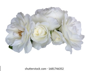 White rose flowers isolated on white background