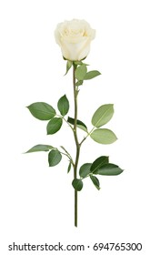 White rose in full depth of field. Detailed retouch.