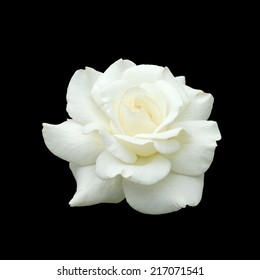 white rose isolate on black background