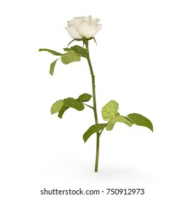 White rose isolated on bright. 3D illustration
