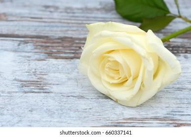 white rose lying on wood