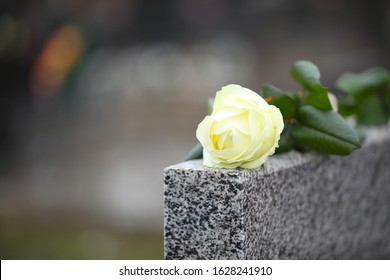 White rose on grey granite tombstone outdoors, space for text. Funeral ceremony