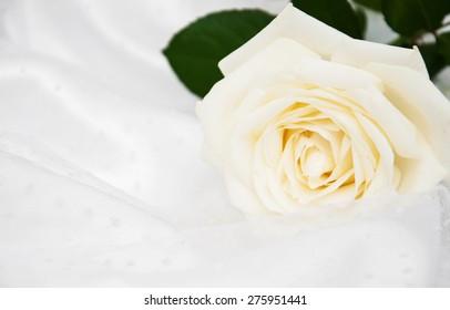 White rose on white silk wedding background