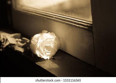 White rose on the window sill.Broken heart or alone concept.