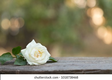 white rose  over wooden table with copy space