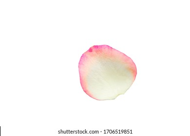White rose petal isolated on white
