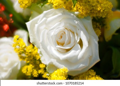 White rose with yellow floreal background