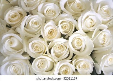 White rose images stock photos vectors shutterstock white roses background mightylinksfo