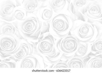 white roses for background